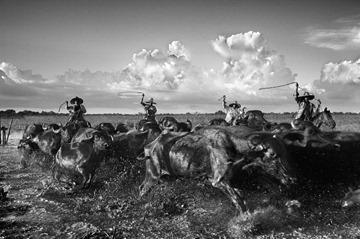 Araquém Alcântara - Vaqueiros, Ilha de Marajó - 2009